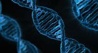 Cadena ADN.