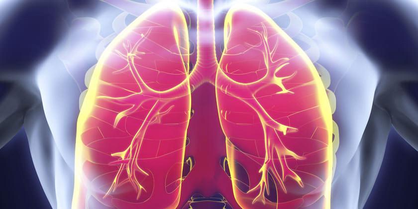 Pulmones vistos desde el interior del cuerpo